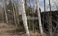 деревня Старая Руза д.8