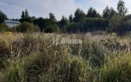 садовое товарищество Чернобылец